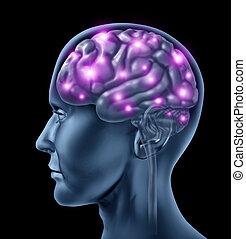 gehirn, menschliche , intelligenz