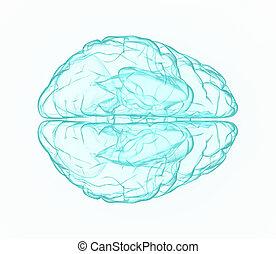 gehirn, röntgenaufnahme, menschliche , blue.