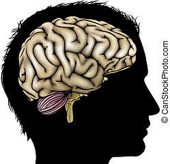 Gehirnkonzept