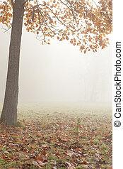 gelassen, baum, -, herbst, nebel, landschaftsbild