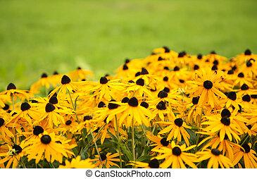 Gelbe Blume im grünen Hintergrund