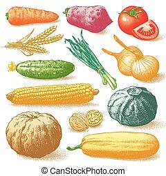 Gemüse und Pflanzenvektor.