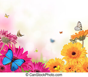 Gerberblumen mit Schmetterlingen