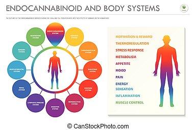 geschaeftswelt, koerper, infographic, endocannabinoid, horizontal, systeme