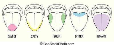 Geschmack Bereiche menschliche Zungenfarben Illustration.