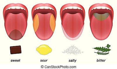 Geschmack Zonen Zunge süß saure salzig bitter.