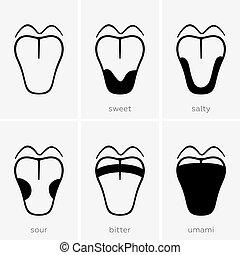 Geschmacksbereiche der menschlichen Zunge.