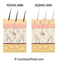 gesunde, haut, comparison., junger, älter