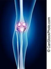 gesunde, menschliches bein