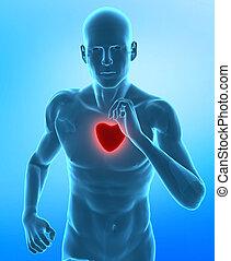 Gesundes Herz