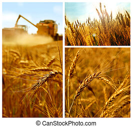 Getreidekollage