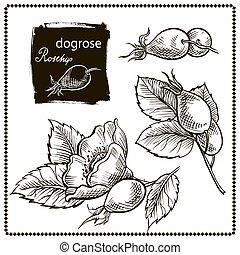 gezeichnet, hund, hand, rose