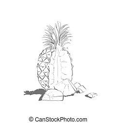 gezeichnet, weißes, kontur, hintergrund, ananas