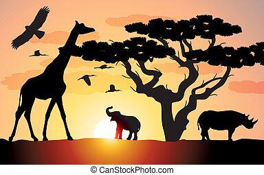 Giraffe, Nashorn und Elefant in Afrika