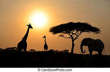 Giraffe und Elefant mit Acacia-Baum mit Sonnenuntergang