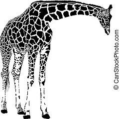 giraffe, vektor