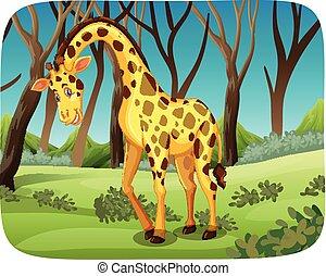 giraffe, wald