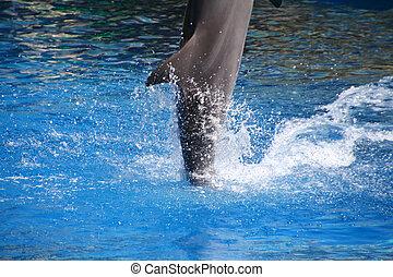 Glückliche Delfine springen aus dem Wasser