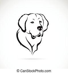 goldenes, bild, vektor, hintergrund, weißes, apportierhund