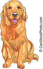 goldenes, skizze, rasse, gewehr, hund, vektor, rotes , apportierhund