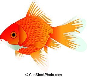 Goldfisch.