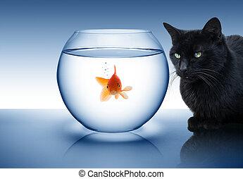 Goldfisch in Gefahr - mit schwarzer Katze.