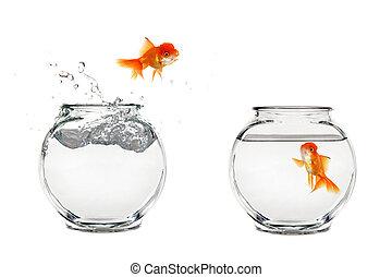 Goldfisch springen.