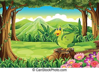 grün, stumpf, vogel, oben, wald