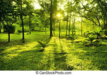 Grüne Bäume im Park