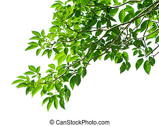 Grüne Blätter auf weißem Hintergrund.