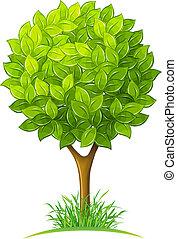 grüne blätter, baum