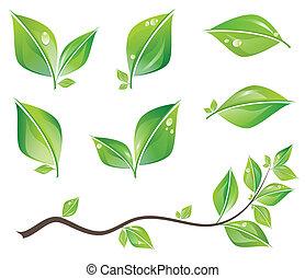 Grüne Blätter bereit