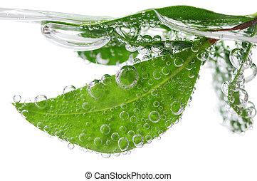 Grüne Blätter im Wasser