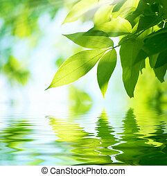 Grüne Blätter. Natürlicher Hintergrund