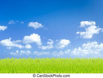 Grüne Grasfelder mit blauem Himmel.