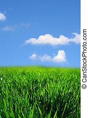 Grüne Graslandschaft