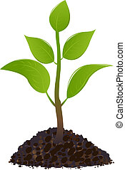 Grüne junge Pflanze