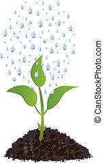 Grüne Jungpflanze mit Regentropfen