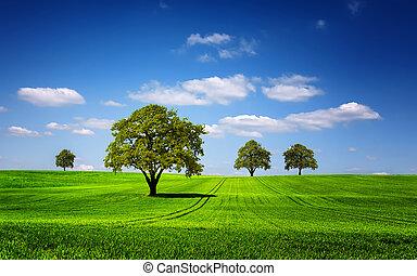 Grüne Naturlandschaft.