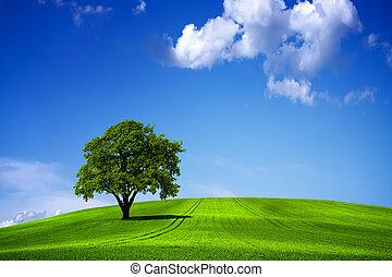 Grüne Naturlandschaft und blauer Himmel.