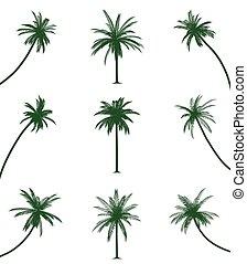 Grüne Palmen