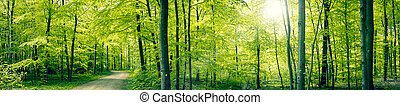 Grüne Waldlandschaft.