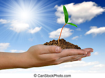 Grüner Anbau in der Hand
