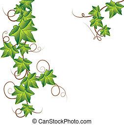 Grüner Efeu. Vektor Illustration