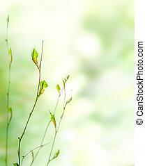 Grüner Frühlingsnatur Hintergrund mit Knospen