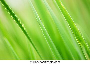Grüner Gras Hintergrund