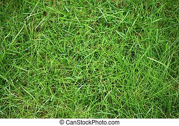 Grüner Gras-Trip
