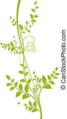Grüner liana weißer Hintergrund