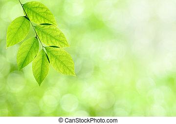 Grüner Natur Hintergrund mit Blättern.