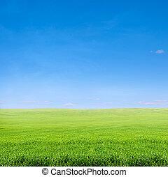 Grüner Rasen über dem blauen Himmel